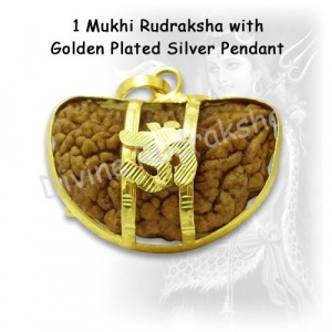 1 Mukhi Rudraksha with Golden Pendant