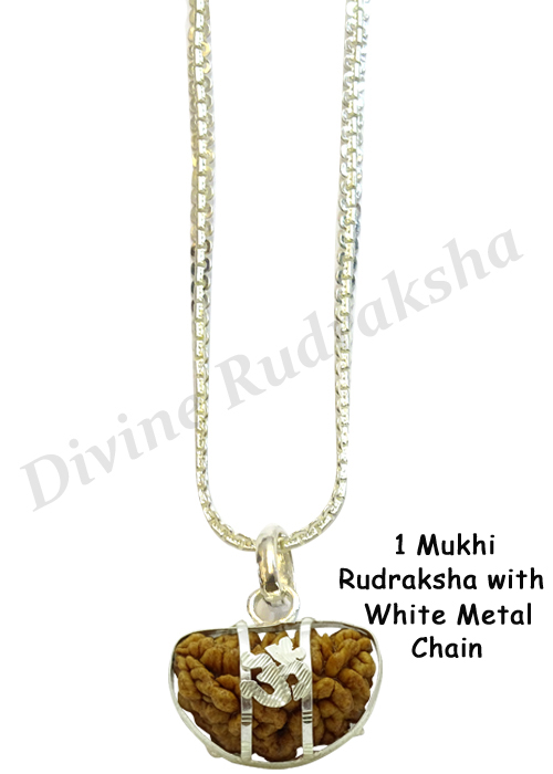 1 Mukhi Rudraksha with Silver Pendant & Chain