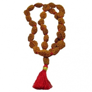 Two (2) Mukhi Rudraksha Mala - Indian