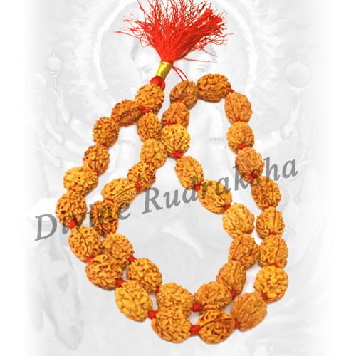 Three (3) Mukhi Rudraksha Mala - Indian