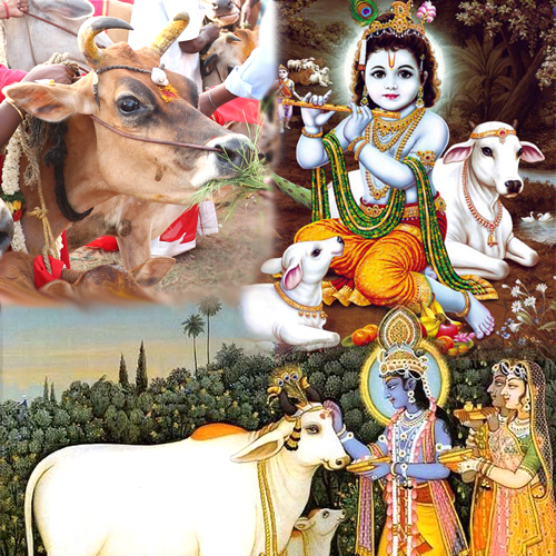 Cow Service Puja