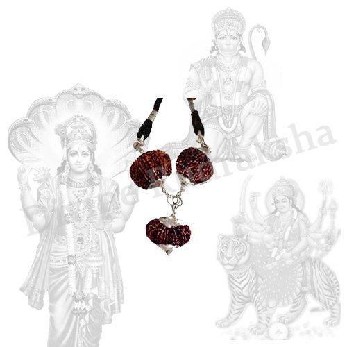 11 Mukhi Rudraksha,Eleven Mukhi Rudraksha,Eleven Faced Rudraksha